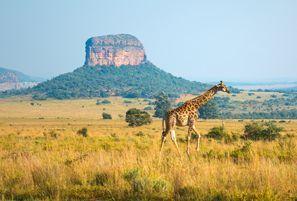 מלונות בEllisras, דרום אפריקה