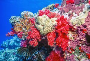 מלונות באלמוג החוף, פיגי